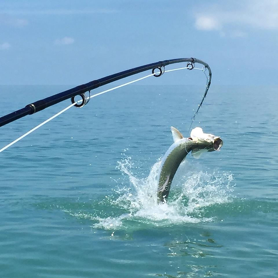 Tarpon fishing with santa rosa charters for Flying fish fleet